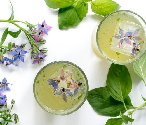 All About BORAGE